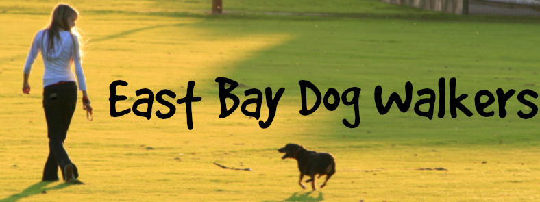 East Bay Dog Walkers